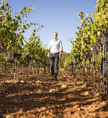 alternatives Investment mit Weinbau auf Mallorca